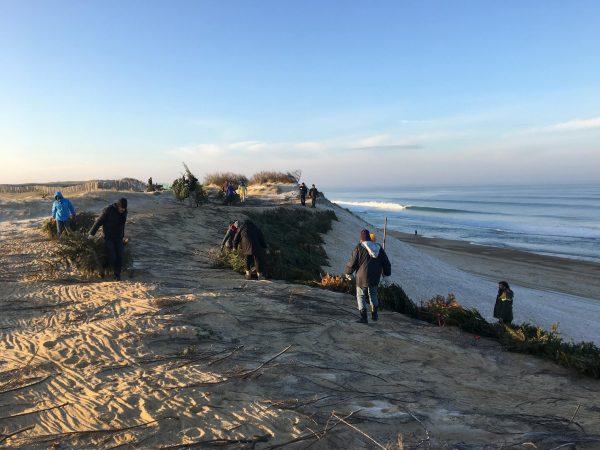 Un sapin pour la dune